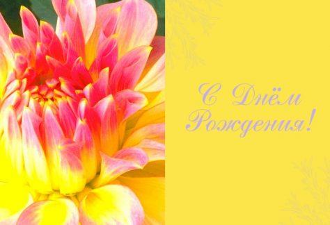Поздравляем Светлану Васильевну с Днём Рождения!